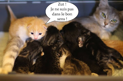 7 chatons qui têtent maman.