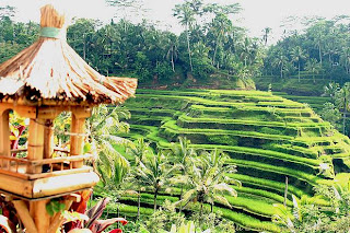 Tempat Wisata Terbaik : Objek Wisata Bali - Tegallalang, Tegallalang, Gianyar yang lagi Hits