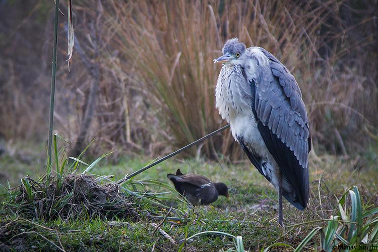 Big Bird Keoladeo Ghana National Park