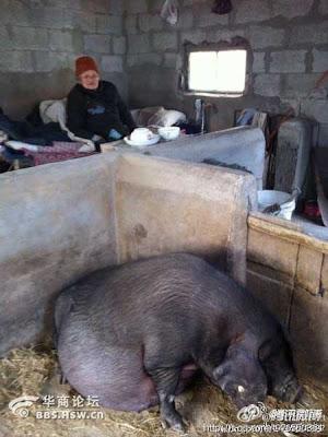 [GAMBAR] Anak Derhaka Tinggalkan Ibu Dikandang Babi, Sedangkan Mereka Tinggal di Rumah Mewah