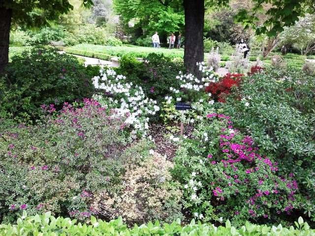 Un jard n en la sierra de madrid visita al jard n for Jardin botanico tarifas