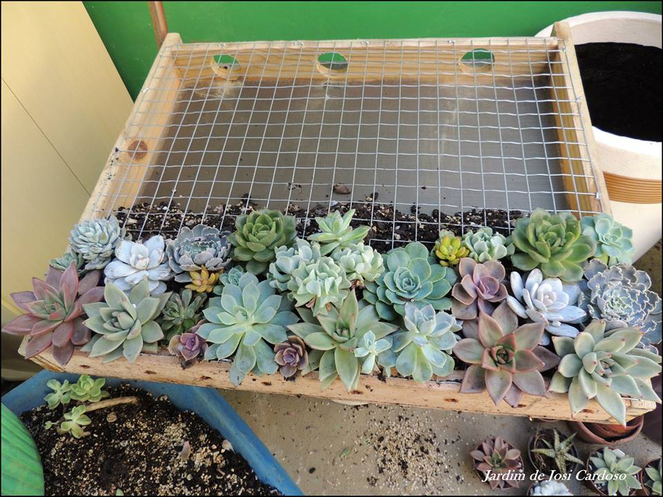 jardim vertical de suculentas: aprender como fazer um Quadro Vivo ou Jardim Vertical de Suculentas