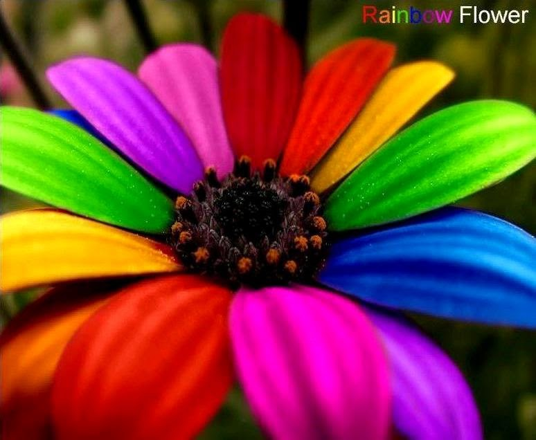 rainbow flower background - photo #14