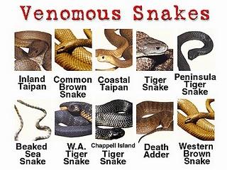 gambar ular berbisa