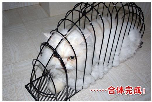 Фото клетки для кота