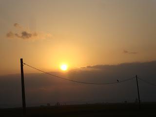 Evening bird in electric wire - Tarragona