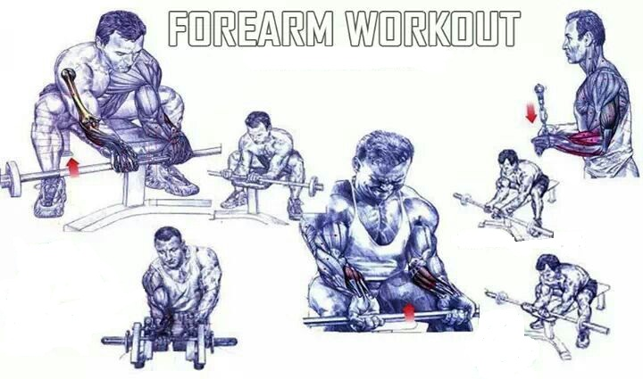 gym workout chart - all-bodybuilding.com