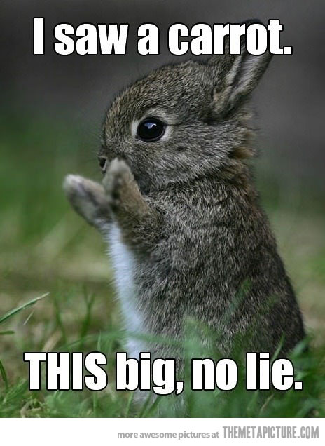 Bunnies Don't Lie!