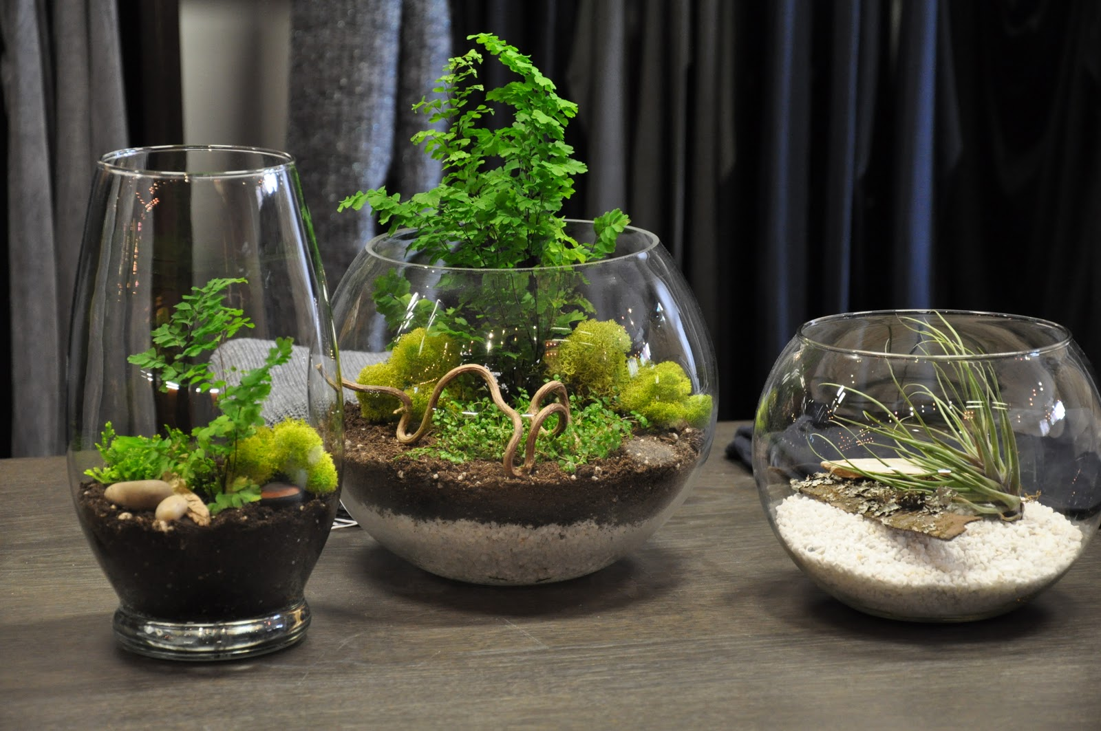 tara mchugh flora terrariums. Black Bedroom Furniture Sets. Home Design Ideas