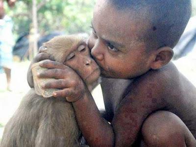 Funny Monkey Love