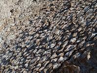 Detall de la forma de rascler a la superfície del runam de Sallent, a causa de la dissolució de la sal per l'aigua de pluja