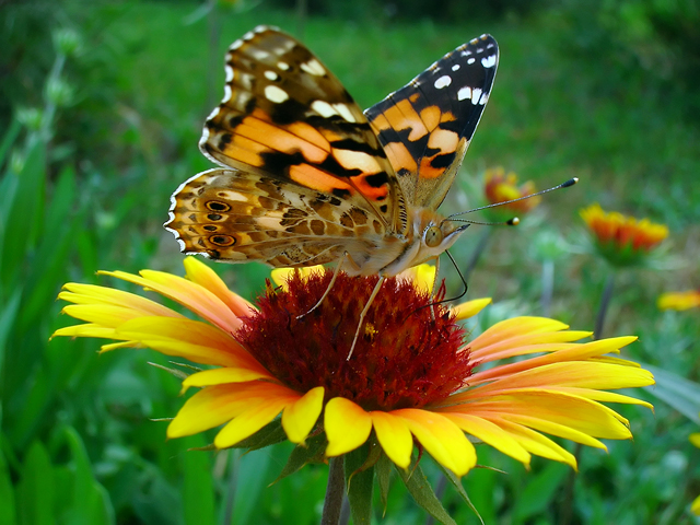 Design a flower bed or garden with butterflies in mind