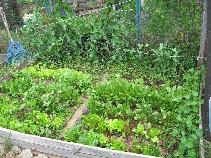 Garden Misadventures