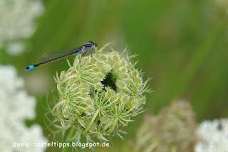 susis basteltipps mit stampin up: Libelle auf einer Blüte