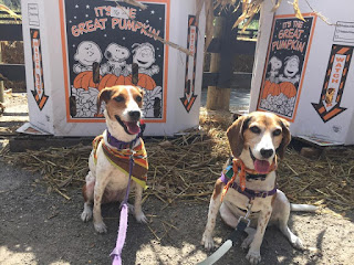 Dogs are welcome at Club Lake Plantation's fall festival