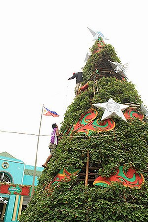 Albay's Camote Christmas Tree