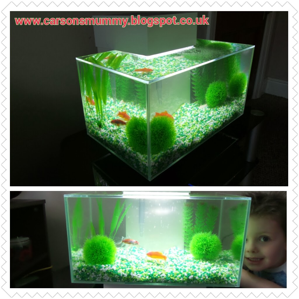 My aquarium with swell uk review coming from carson 39 s for Cloudy water in fish tank solutions