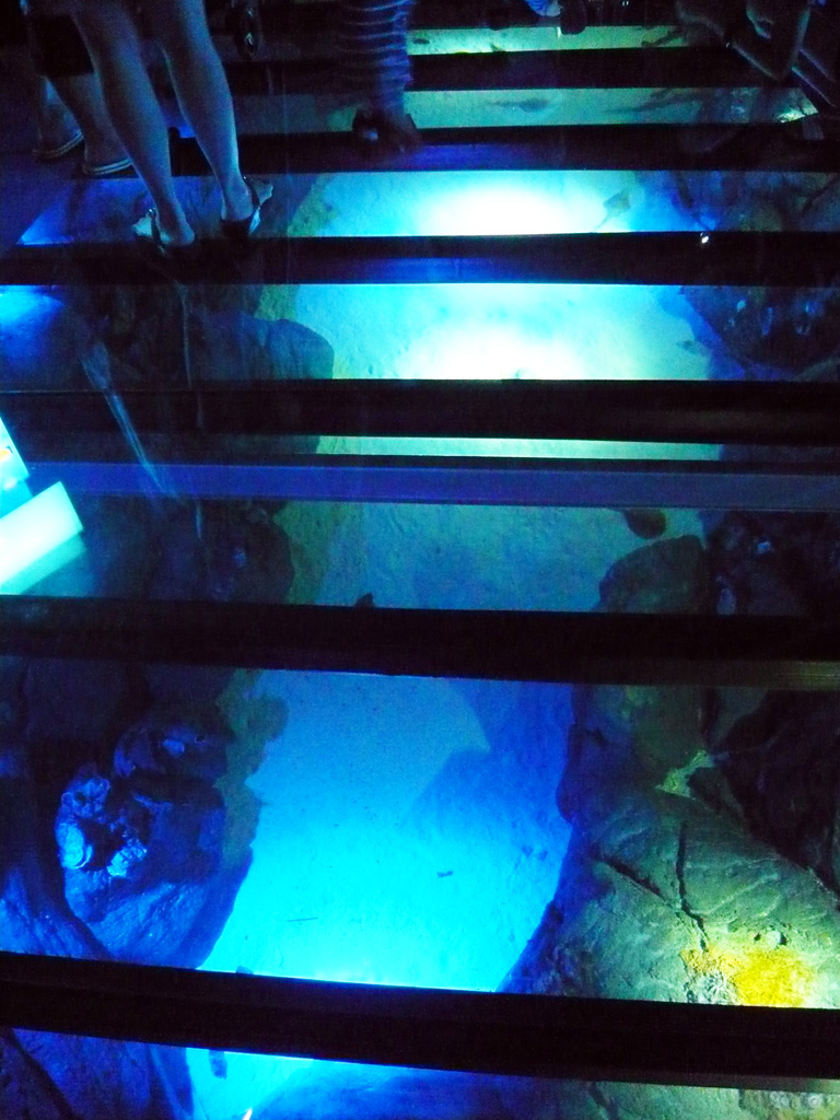 Fish tank floor for Floor fish tank