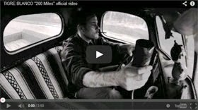 Tigre Blanco 200 Miles