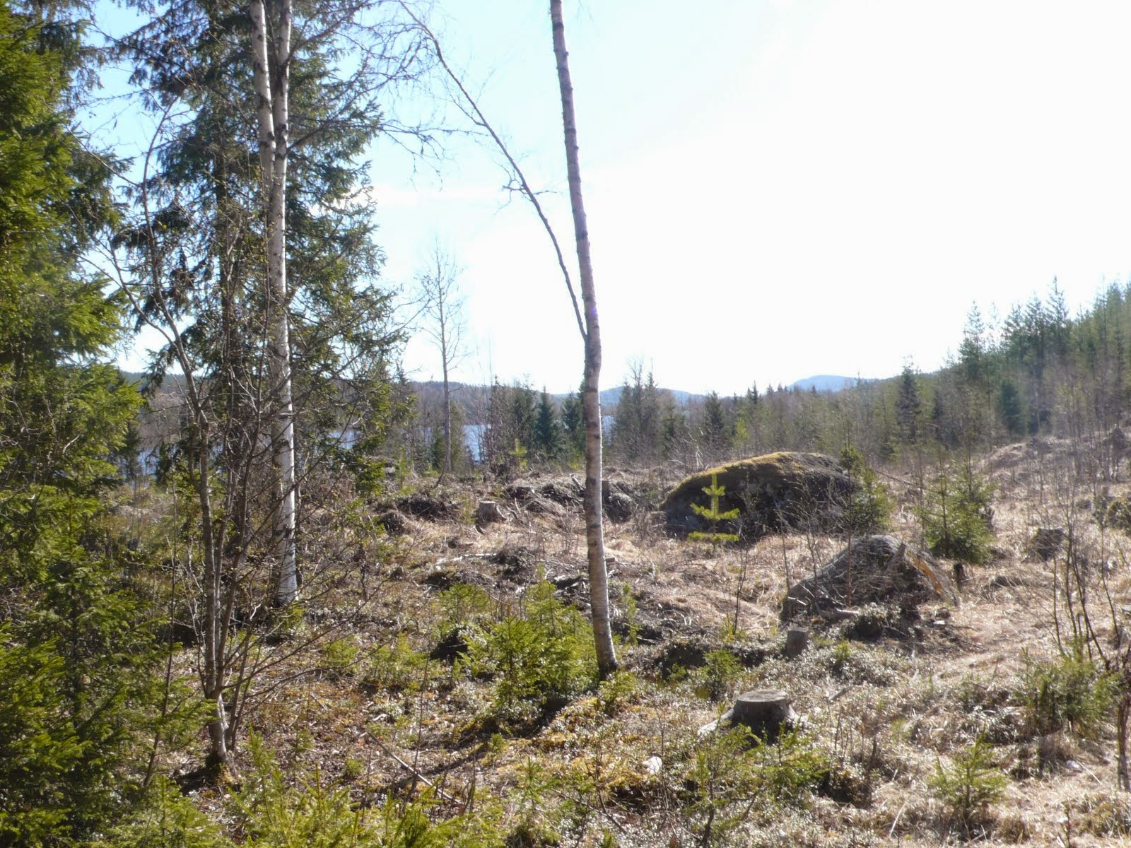 Grannässkogen