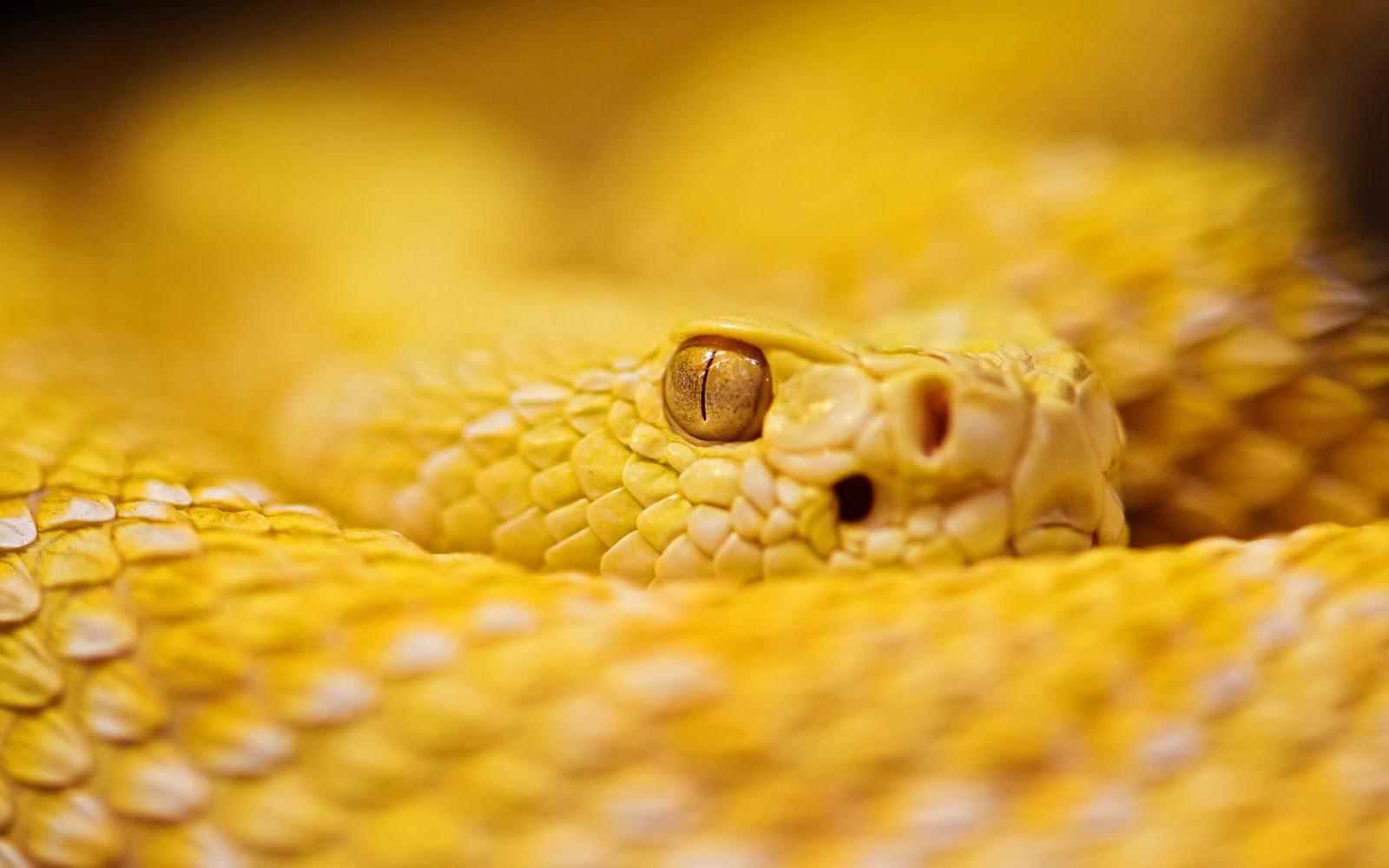 """<img src=""""http://2.bp.blogspot.com/-9H2zZUCh6m0/UtgF1uqjYNI/AAAAAAAAISk/dL3-E8JZP1U/s1600/animal-wallpapers-snake.jpg"""" alt=""""Animal wallpapers"""" />"""