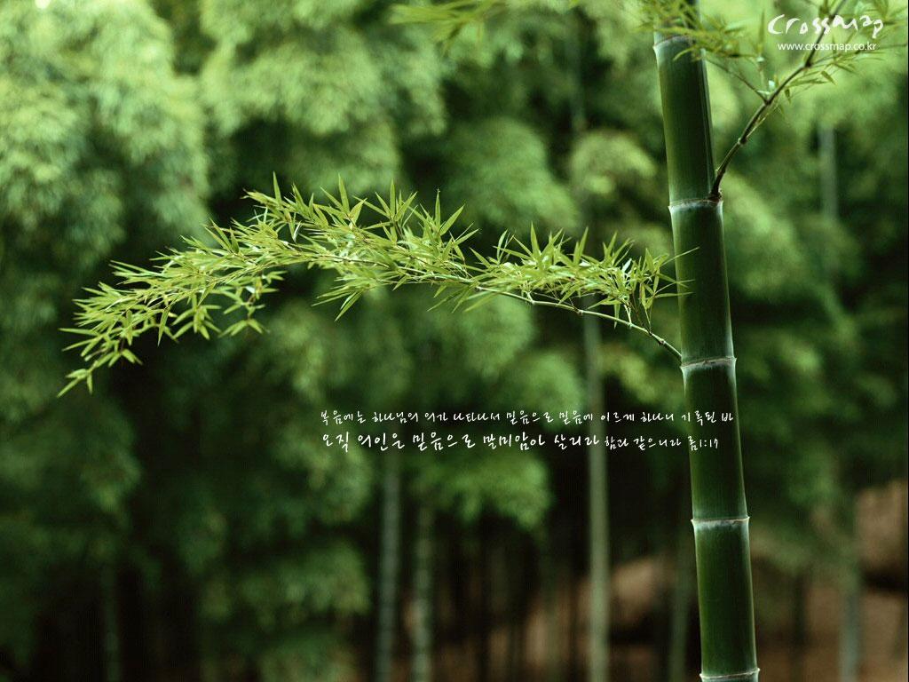 http://2.bp.blogspot.com/-9H9JivxDK6I/TYHWoJc2sCI/AAAAAAAAAHk/13ifMZdCsZM/s1600/bamboo-wallpaper.jpg