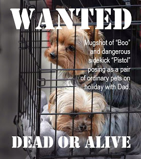 Johnny Depp's dogs Pistol and Boo