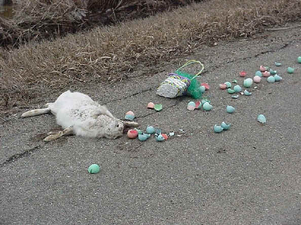 real easter bunnies and eggs. real easter bunnies and eggs.