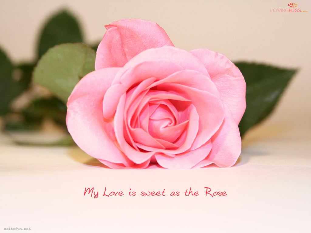 http://2.bp.blogspot.com/-9HbALtIfKIw/ToZLcIIRaNI/AAAAAAAADJ0/3MpxkGgeCqI/s1600/love+rose+wallpaper+3.jpg
