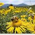 Oficial investigación de la UE verifica holocausto abejas causada por peligrosos venenos artificiales