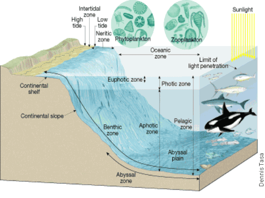 Mma sea term follow the voyage ftv 2 18 2 12 ocean zones for Ocean floor zones diagram