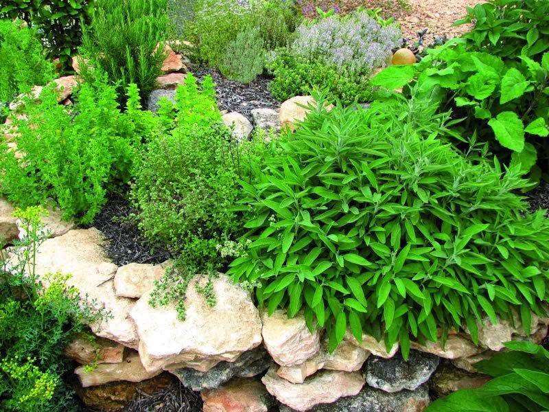 Arte y jardiner a plantas arom ticas como dise ar un jardin - Como disenar un jardin exterior ...