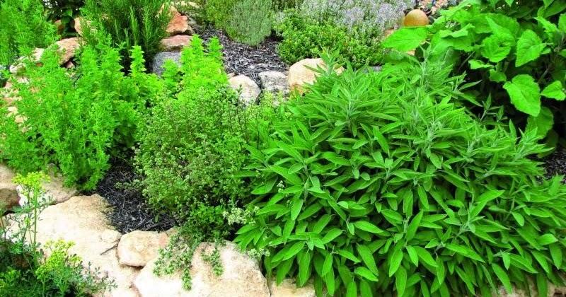 Arte y jardiner a dise o de jardines plantas arom ticas for Jardin de plantas aromaticas