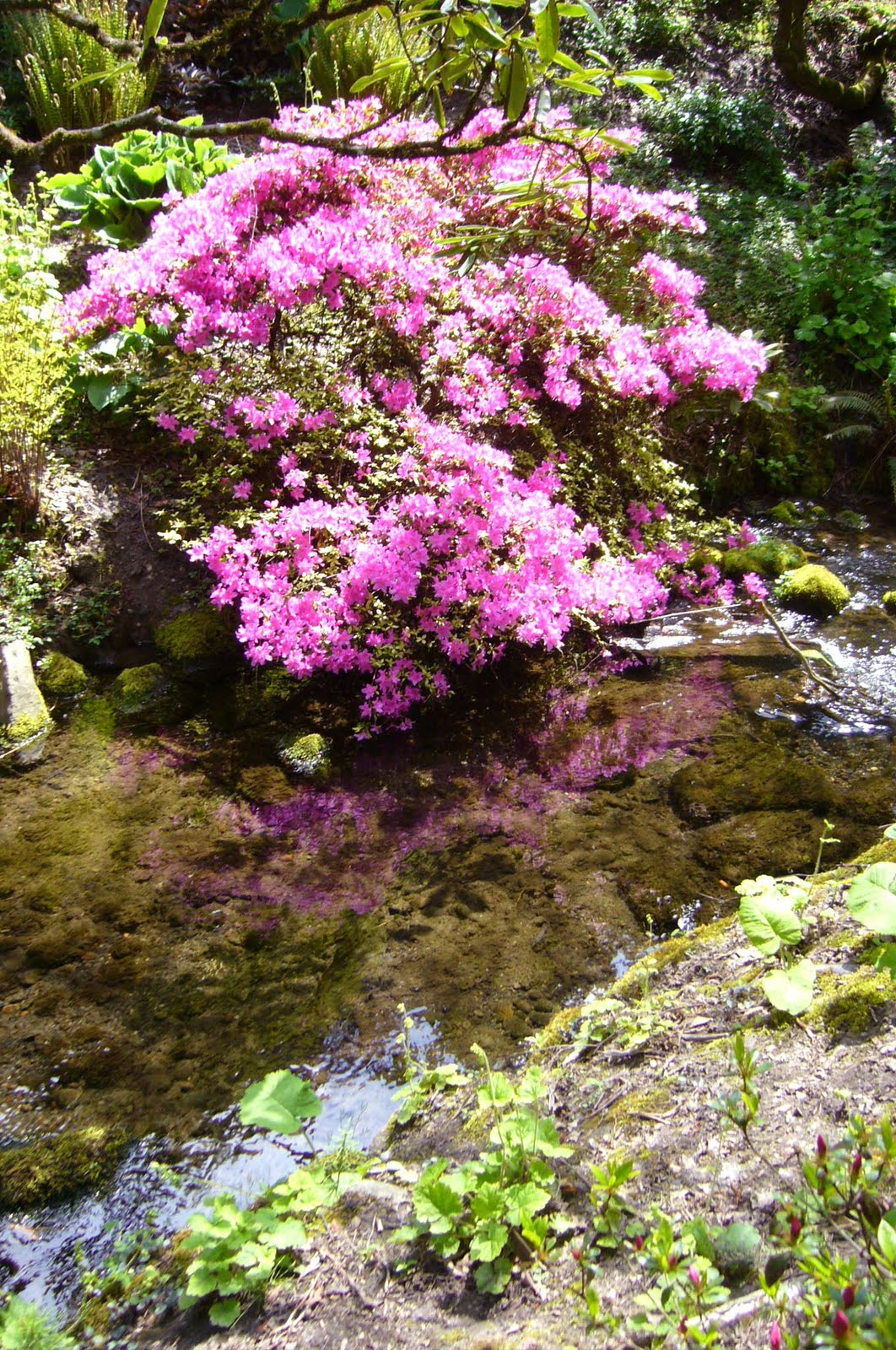 Amateur Bot-ann-ist: Crystal Springs Rhododendron Garden (Portland ...