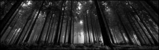 http://fadingsstars.blogspot.com/