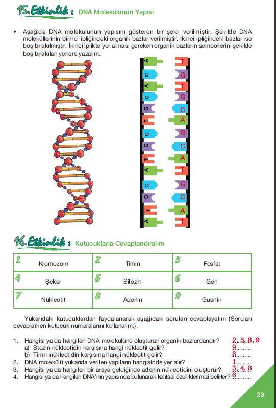 %C3%A7al%C4%B1%C5%9Fma+kitab%C4%B1+sayfa+23%2C+15.+ve+16.+etkinlik+cevaplar%C4%B1.JPG (541×800)