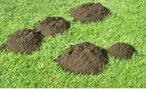 cómo hacer abono orgánico casero - que puedo hacer con los desperdicios de comida - pasos para hacer fertilizante casero organico, pasos para hacer fertilizante casero natural orgánico, como preparar abono casero orgánico natural