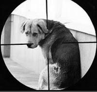 Собака под прицелом