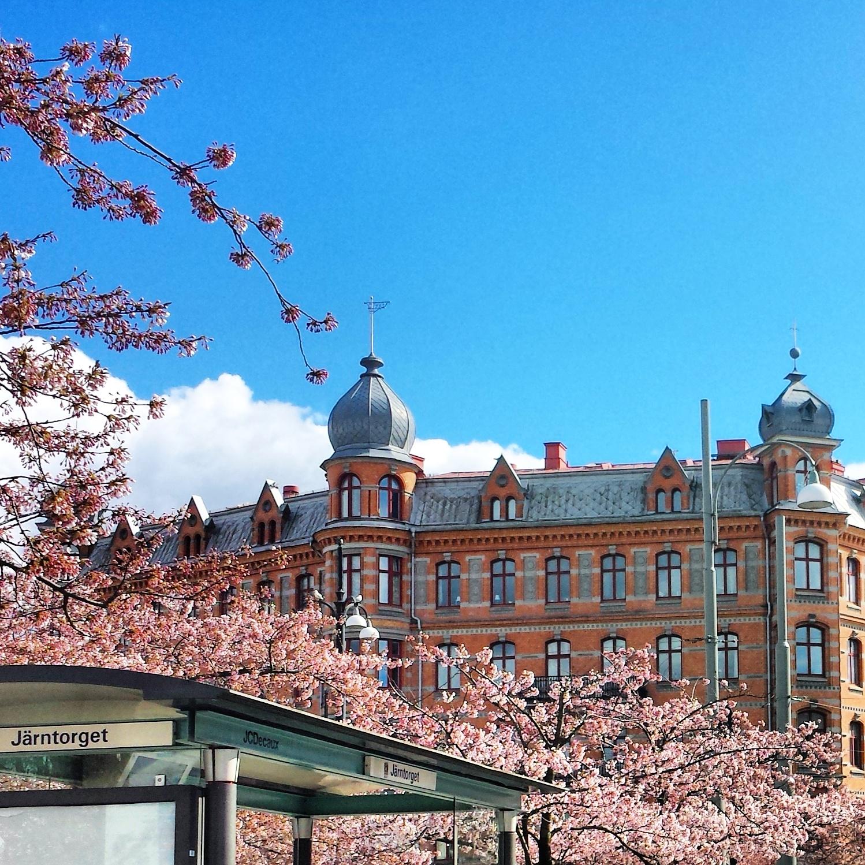 Göteborg Järntorget cherry blossoms körsbärs  |  Postcard from Göteborg Gothenburg  |  http://afeatherynest.com