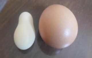Galinha põe ovo diferente e chama atenção no interior da Paraíba