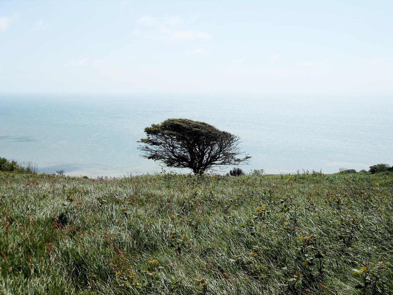 Alberi a Beachy Head
