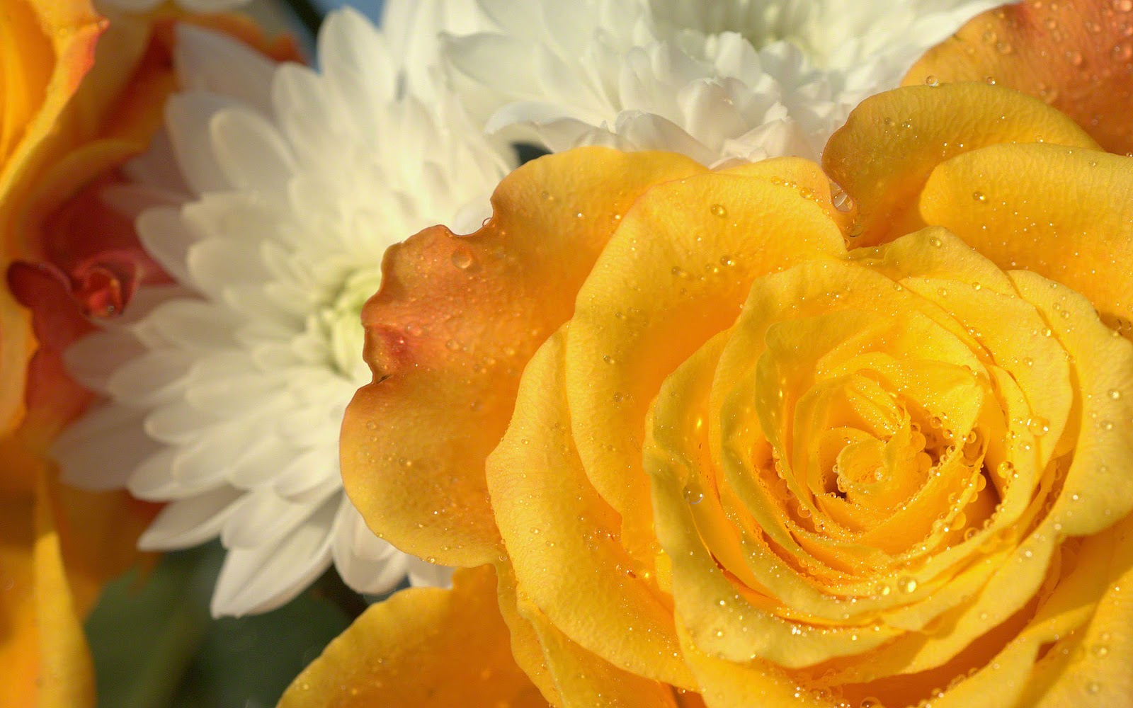 http://2.bp.blogspot.com/-9JbgH2IZbSU/TsvMraCPjLI/AAAAAAAAAeU/hjouqdkCGVc/s1600/yellow-rose-wallpaper-dsc06871.jpg