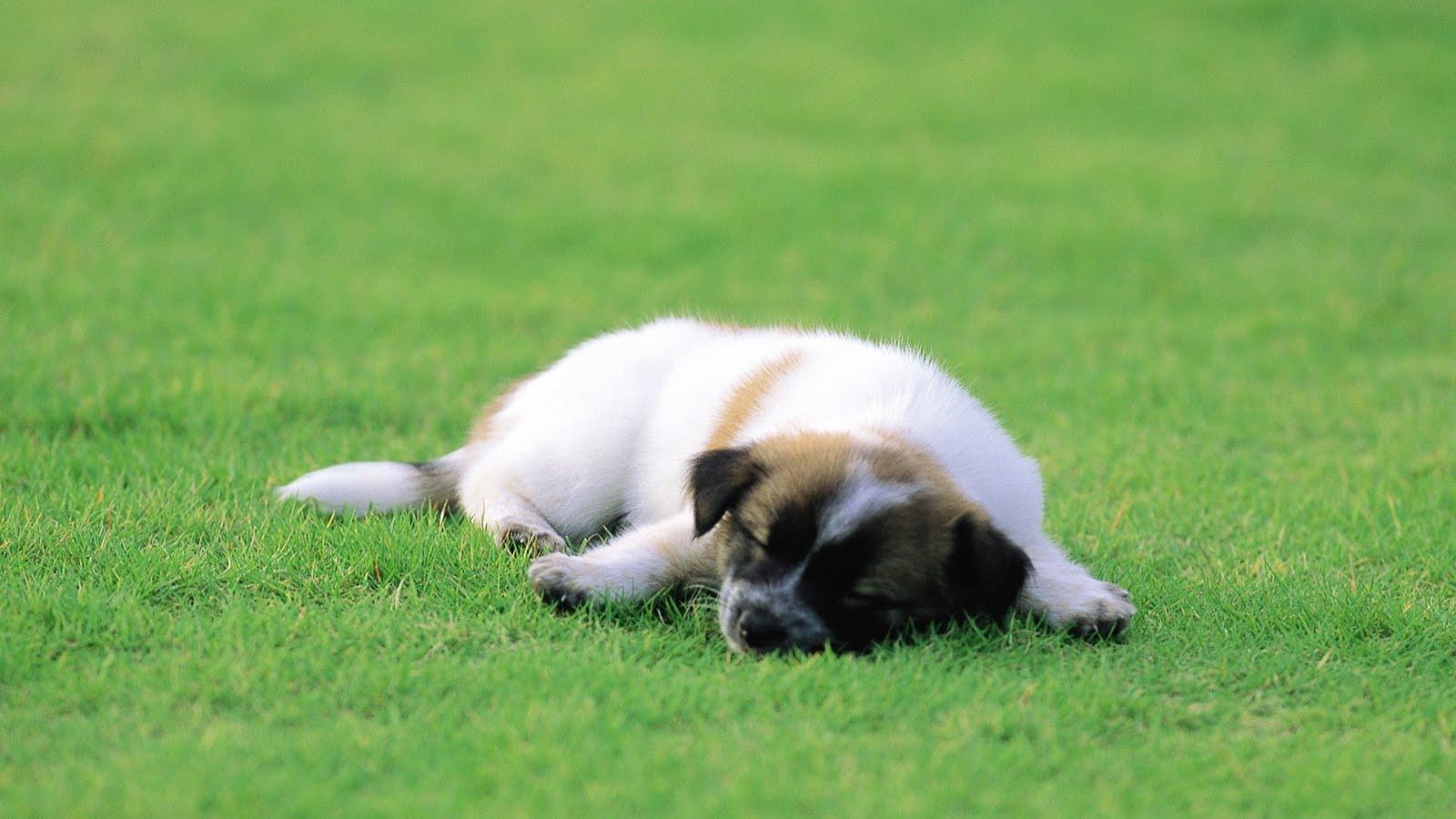 download wallpaper dog little - photo #21