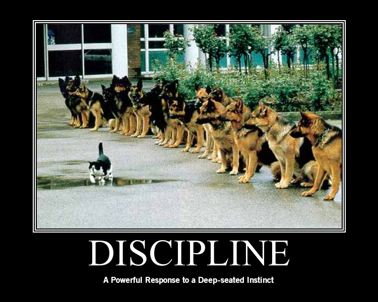 military discipline Military schools in michigan that are  military schools in michigan (1 military school  self-discipline is one of the most crucial qualities that the.