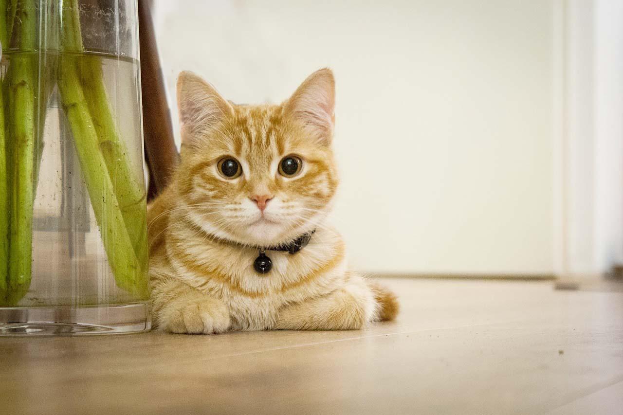 Vinyl Flooring, cute cat floor