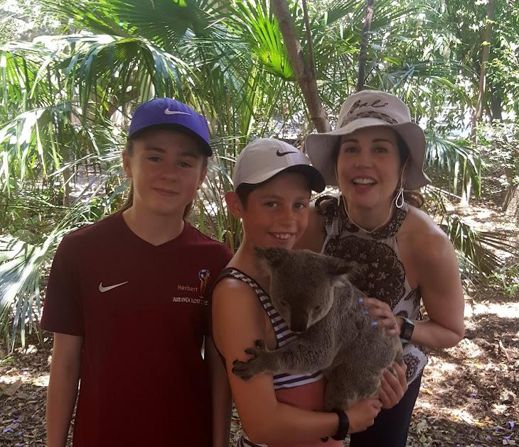Koala park near Brisbane, Aus