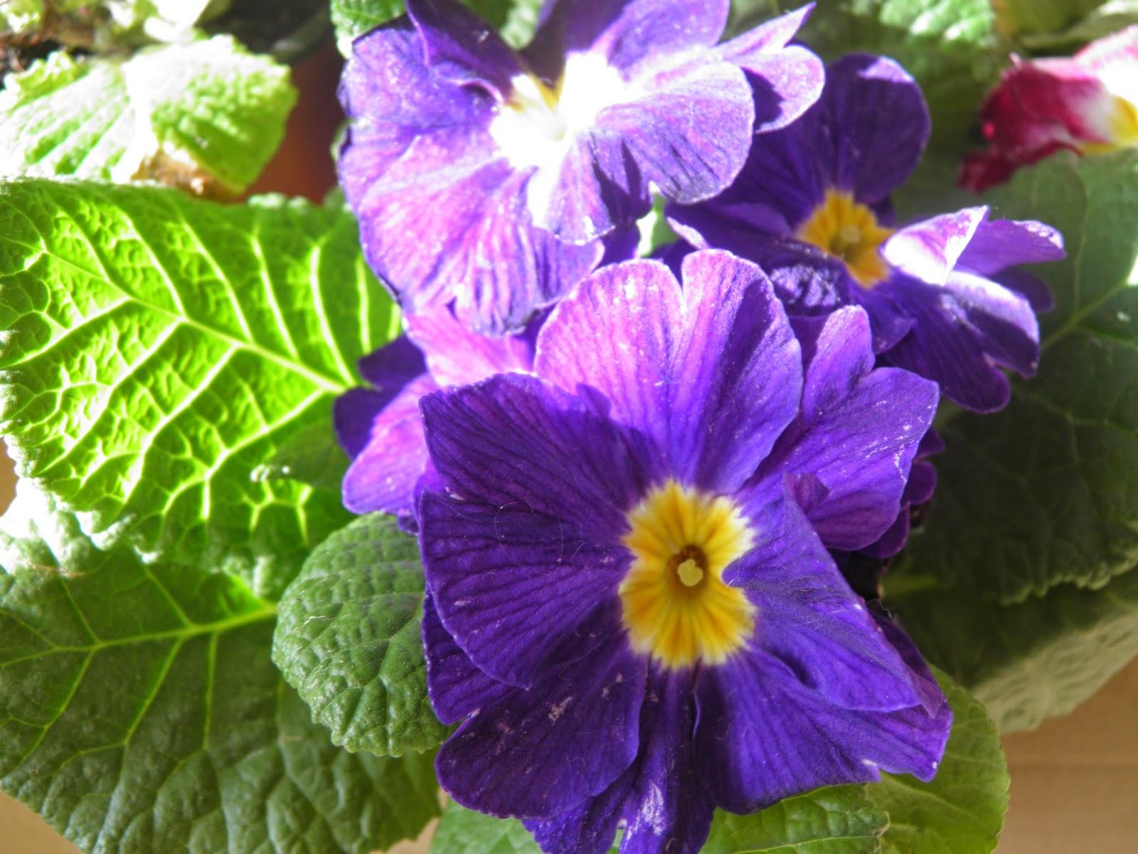 Mon jardin quercynois soldes d 39 hiver for Plantes soldes