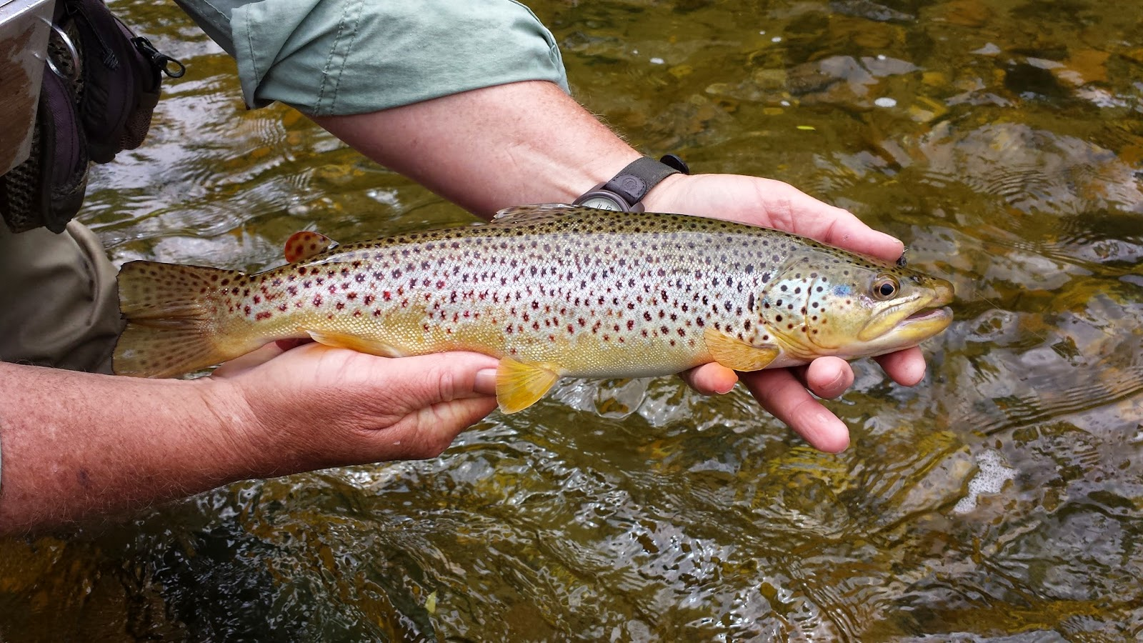 vermont fly fishing fly fishing for vermont trout