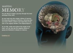 cerebro+y+memoria+.jpg