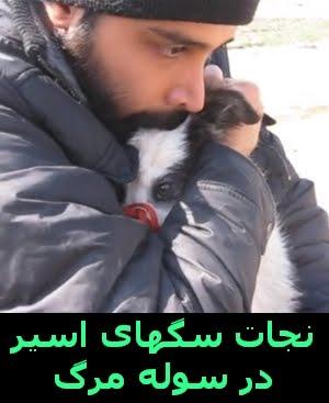 عیدی پناهگاه مهر مشهد به دوستداران حیوانات